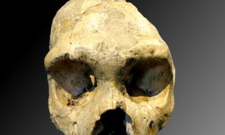 Image illustrant l'article Crâne Nrandertal de Les Clionautes