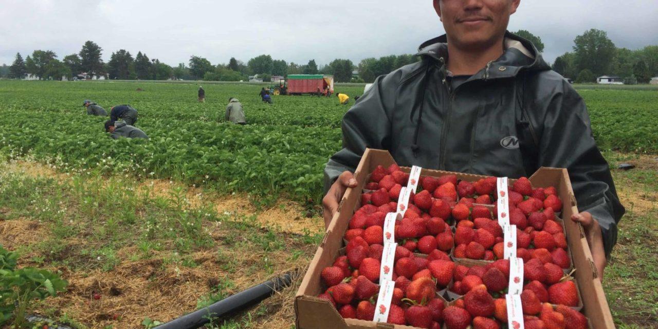 Les migrants internationaux, nouveaux acteurs des dynamiques agricoles françaises