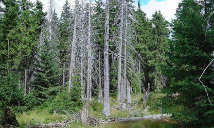 Image illustrant l'article 725px-Bog_spruce_forest de Les Clionautes
