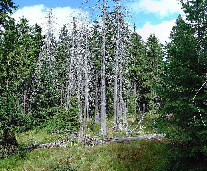 Forêts vosgiennes, climats d'hier à demain