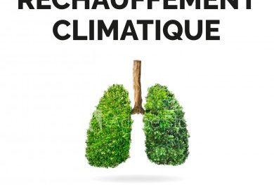Image illustrant l'article B04E80F7-7095-4DBB-8A1A-CDD9B62857E3 de Les Clionautes