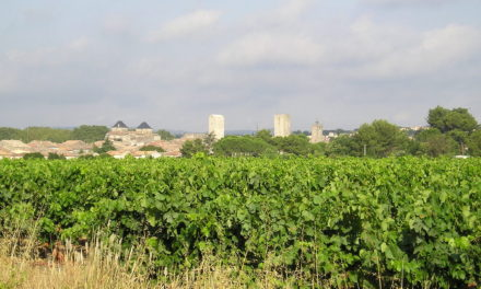 Parcelle de vigne à Pignan