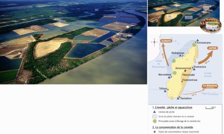 De la mangrove malgache à la poissonnerie du supermarché: la filière crevette, chronique d'une « ruée vers l'or rose », de Madagascar à l'Europe